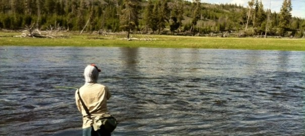 Firehole river yellowstone wy wandering angler for Cabine di hugo salt creek